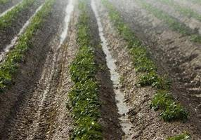 global agtech investors find 'rich pipeline of opportunities' in israel