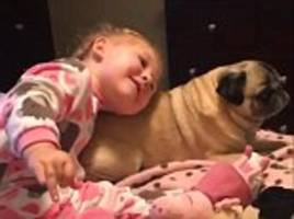 Two-year-old girl can't contain her love for her pet pug as she's filmed paying tribute to her beloved pooch