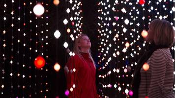 enchanted forest lit up with 'shimmer' show
