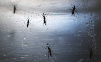 Zika microcephaly cases surface in Thailand