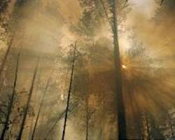 Siberia forest fires engulf 2 mn hectares