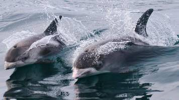 Safeguard dolphins, government urged