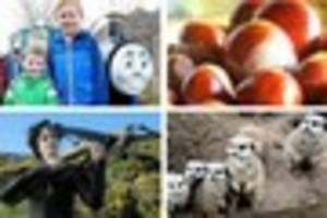 5 things to do with the kids this weekend ... from thomas to...