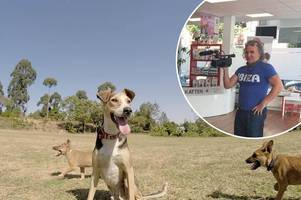irvine filmmaker documents story of dog who had leg hacked off by machete thugs