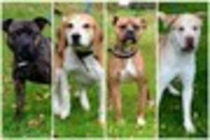 Give a Dog a Home: Can you help rehome these dogs from City Dogs'...