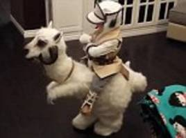 'in tough times like these, all the world needs is a boy and his tauntaun': toddler star wars fan trots around in his incredible handmade halloween costume