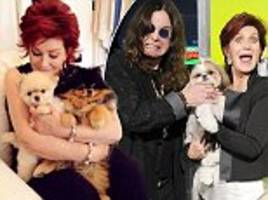 sharon osbourne forks out £230,000 a year to fly her pampered pooches first class