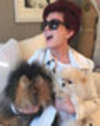 x factor's sharon osbourne splashes the cash flying her pet pooches first class