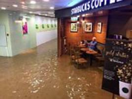 Hong Kong's 'Starbucks Uncle' is latest social media star after reading newspaper in floods