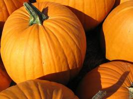 Weekend: Pumpkin Patches, Dog Costume Contest, Night Hike + S'Mores