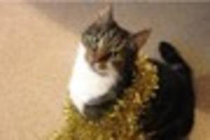 Missing cat George was last seen in Heamoor and her owner is...