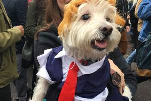 the tompkins square halloween dog parade was the best day of my life