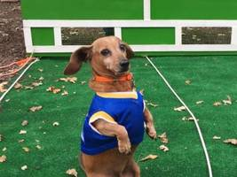 "spooky haunted houses; dancing principal; champion of oktoberfest ""doxie"" races: saturday smiles"