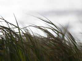 weather alert: wind advisory issued for maryland saturday