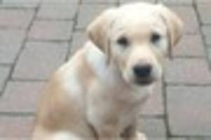 Dog owners are increasingly treating their pets as children,...