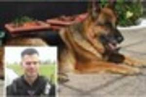 Police dog stabbing  prompts Devon officer to call for cop dogs...