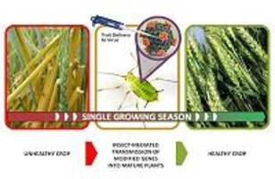 DARPA enlists insects to protect agricultural food supply and commodity crops