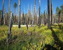 Wildfire management or fire suppression