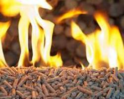 Biomass heating could get a 'green' boost with the help of fungi