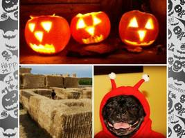 Halloween Weekend In NorCal: Hay & Corn Mazes; Pet & Costume Parades, Dances; Festivals; Trunk-or-Treating; Pub Crawl