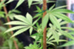 cannabis grow worth £57,000 uncovered by firefighters