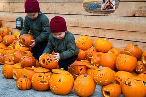 edinburgh zoo tiger-carved pumpkin drive a roaring success as youngsters submit over 1,000 designs