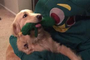 gumby and dog are the best pals