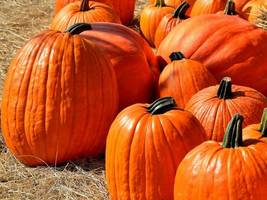 East Haven Police Issue Safety Tips for Halloween