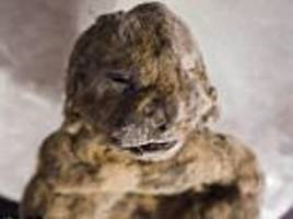 cave lions crushed to death in siberia were preserved in ice for 30,000 years