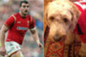 welsh captain's dog ledley in the mood  to cheer wales to victory...