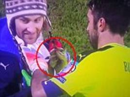 gianluigi buffon signs pitch invader's shirt while ball is in play during italy's emphatic victory over liechtenstein