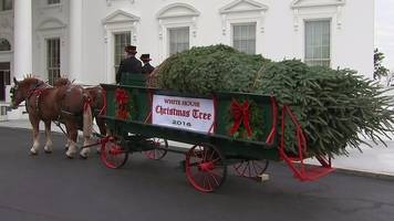 white house christmas tree arrives in style