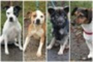 Give a Dog A Home: Dogs from City Dogs' Home in Bucknall