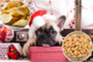 The festive foods that could KILL your pet this Christmas