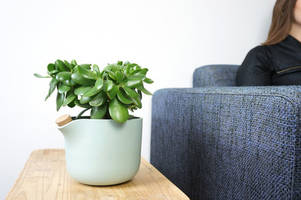 natural balance self-watering planter makes caring for houseplants effortless