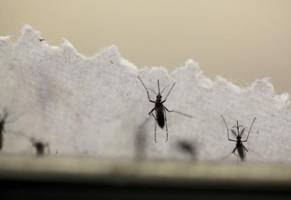 Texas reports the first case of Zika that likely came from local mosquitoes