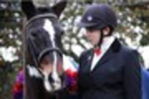 ​touching tributes to plymouth's 'cheeky' veteran horse, sgt...