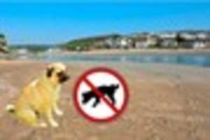 A debate has erupted over dogs on Porth Beach after the council...