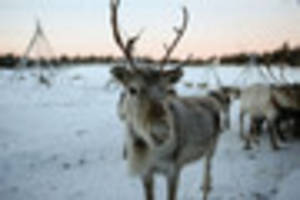 University of Leicester urged to cancel live reindeer display at...