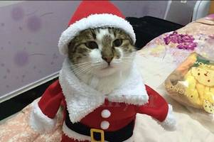 Festive costumes and gifts to give to your pet this Christmas