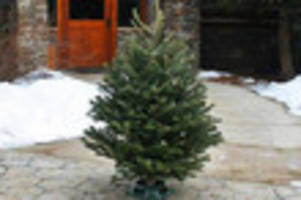 This Company Will Deliver Christmas Trees To Your Door For 50% Off