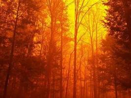 tennessee wildfires: fires extinguished, death toll rises to 10
