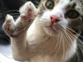 Cat named Lobstah has one paw which is shaped like a CLAW thanks to unfortunate deformity