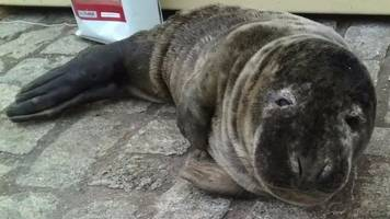 Lost seal pup found at Liverpool ice rink