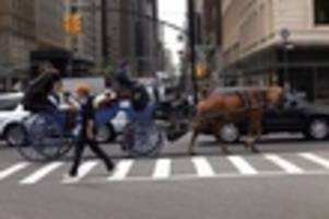 video: animal rights activists convince tourists to get out of horse-drawn carriage