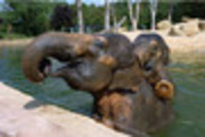 twycross zoo asian elephant tonzi has died after severe arthritis...