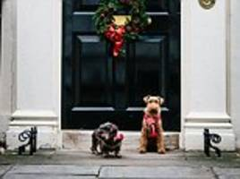 philip hammond finally allowed to unleash his pet dogs but only for his christmas card