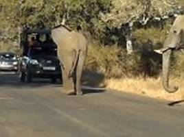 South African elephants stand in the middle of the road to allow a baby to cross