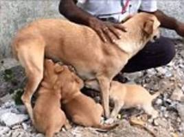 The happy hounds of Hyderabad! Heartwarming video captures the moment three puppies are reunited with their mother after being rescued from rocks in deep water-filled quarry