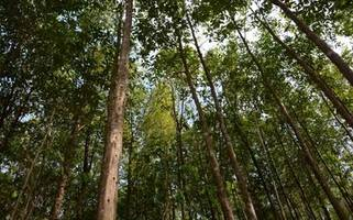 asia plantation capital berhad proudly confirms status as a bioeconomy company